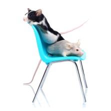 Egereknek