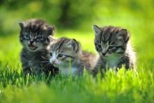 Kölyök cicáknak