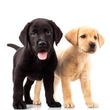 Kölyök kutyáknak
