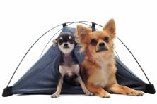 Kutyaház, mobil, nylon