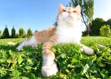 Ivartalanított cicáknak