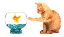 Felnőtt cicáknak