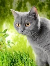 Idős cicáknak